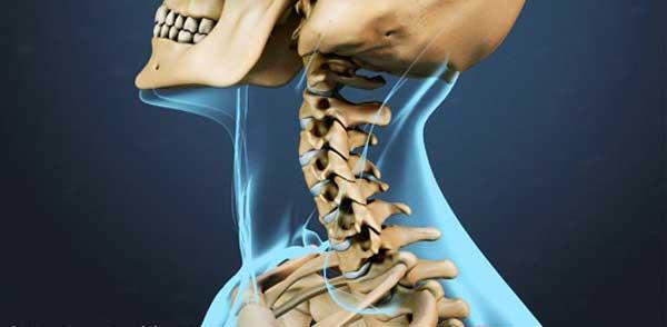 آناتومی گردن؛ مهره ها، اعصاب، عضلات و رگ ها