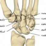 مچ دست – استخوان و مفصل