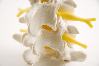 spine22